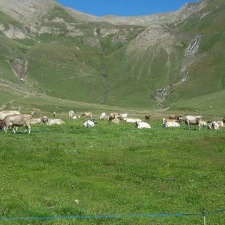 Alpe Bettelmatt : IMG_20180820_182138_749_large.jpg