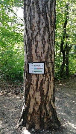 Waldseilpark Kahlenberg Wien Aktuelle 2019 Lohnt Es Sich Mit