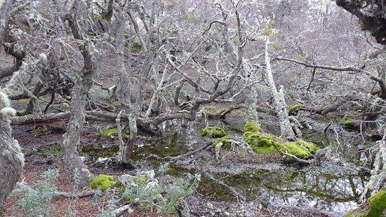 Parque Nacional Tierra del Fuego: P1100704_large.jpg