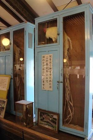Ryukawahora Museum