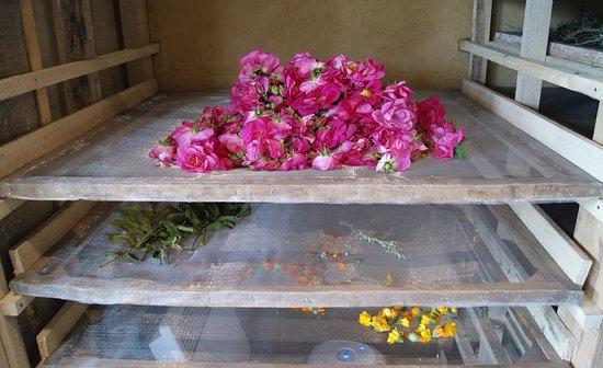 Sepmes, Frankrijk: Les plantes aromatiques et médicinales - séchage des roses