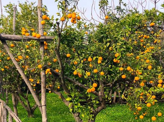 I Giardini di Cataldo: piante di arance