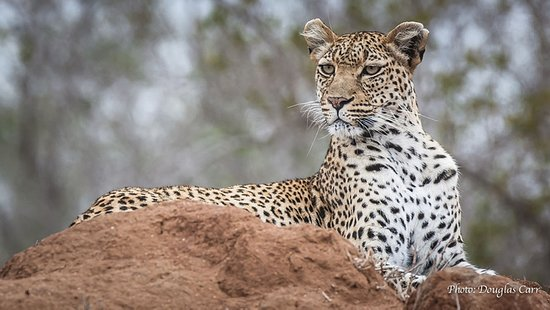 African Memory Photo Safaris Pty Ltd