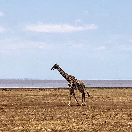 Lake Manyara und Ngorongoro Tour
