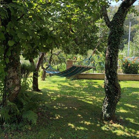 Selva di Santa Fiora-billede