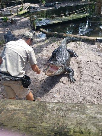 St. Augustine Alligator Farm Zoological Park: 20180822_111125_large.jpg