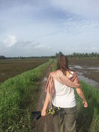 Alappuzha District, India: Walking between rice paddy fields