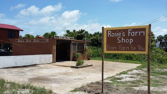 Hopkins, Belize: View of Our Little Farmers Market.
