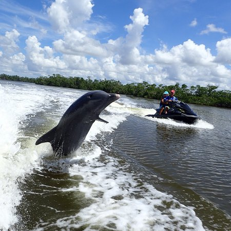 Capt. Ron's Awesome Everglades Adventures: photo4.jpg