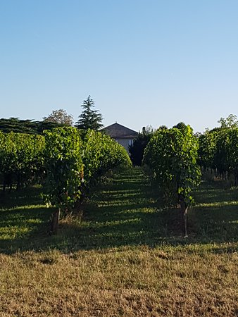 Pujols, France: the view of one of the vineyards surrounding the villa