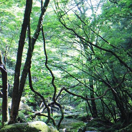 Otome Waterfall: photo5.jpg