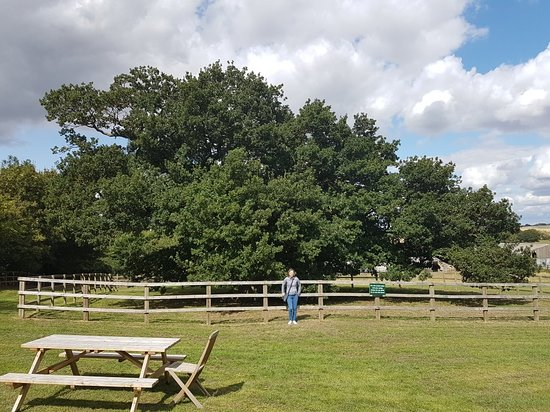 Bowthorpe Oak: 20180825_133831_large.jpg