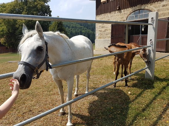Gomadingen, Alemania: Horse and foals