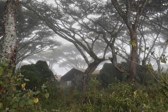 Lemala Ngorongoro Tented Camp: Tents