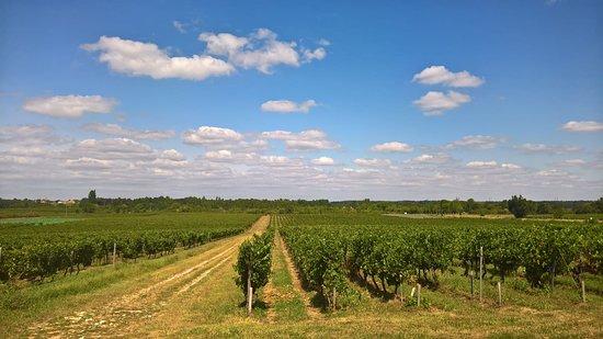 Fours, Francja: Les vignes de la propriété