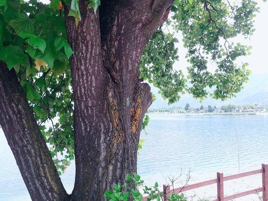 Lago di Caldonazzo: Uno scorcio