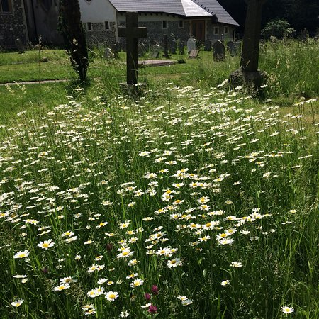 Abbots Langley, UK: Photos of flower arrangements and flowers in the churchyard