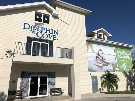 写真Dolphin Cove Cayman枚