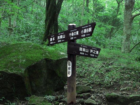 Mt. Sengen (Hakone-machi)