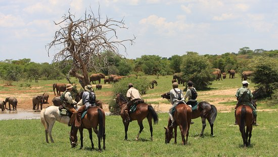 Matabeleland North Province, Zimbabwe: BIG 5 RIDE IN HWANGE NATIONAL WITH RIDE ZIMBABWE