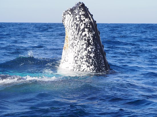 Tweed Heads, Australia: Whale and diving charters