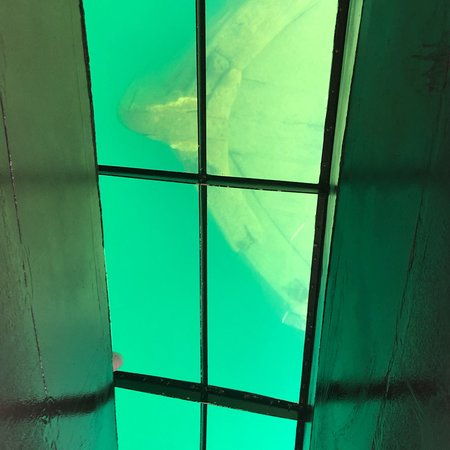 Glass Bottom Shipwreck Tours: photo0.jpg