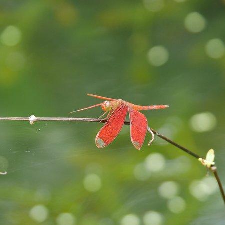 写真鳳園蝴蝶保育區枚