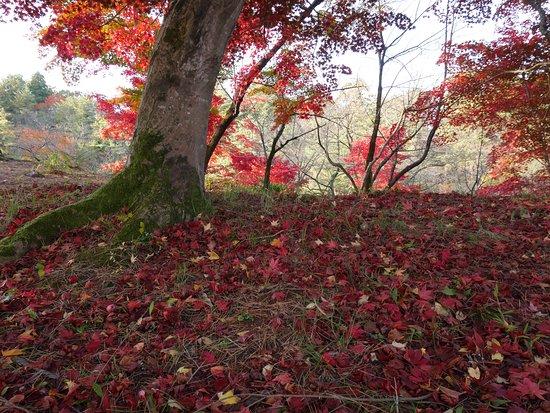 Gosen, Japan: 紅葉の頃