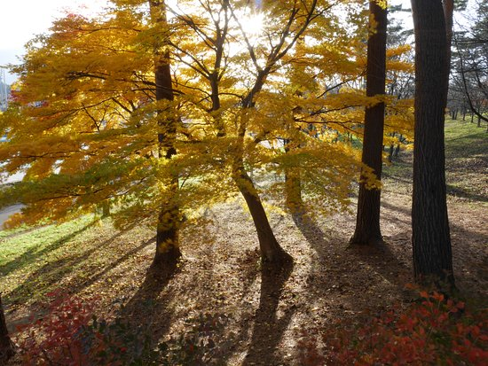 Gosen, Japan: 黄葉の頃