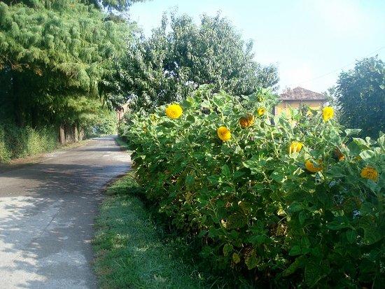 Villa Padronale Cascina Fontana: La stradina d'accesso