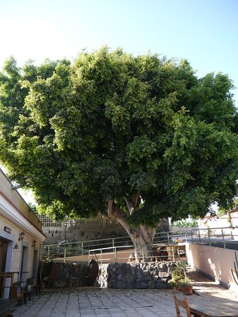 Hotel Rural El Navio - Only Adults: The beautiful old tree outside the reception building