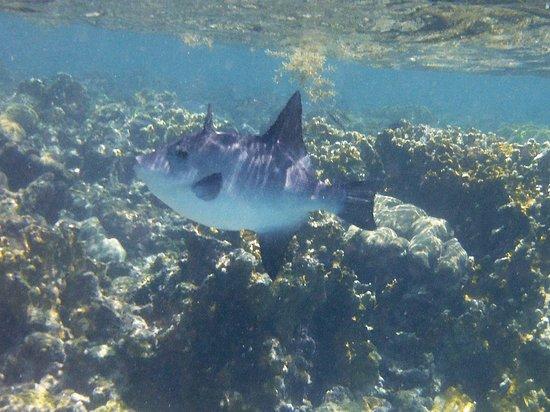 Day Trips BVI: Sunfish