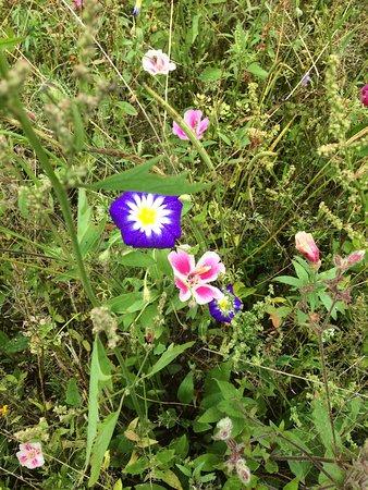 Pretty summer flowers in the garden picture of threave garden threave garden pretty wildflower patch mightylinksfo