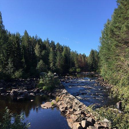 写真Wildlife Sweden-Camp Ängra枚