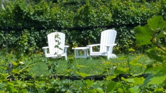 Изображение Finger Lakes Wine Country