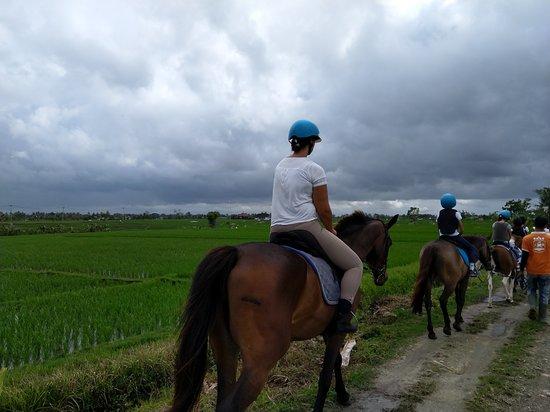 Royal Sporthorse Bali: through the rice fields