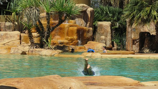 Cooinda Lodge Kakadu: Nice pool, for adults and for kids (special parts of the pool).