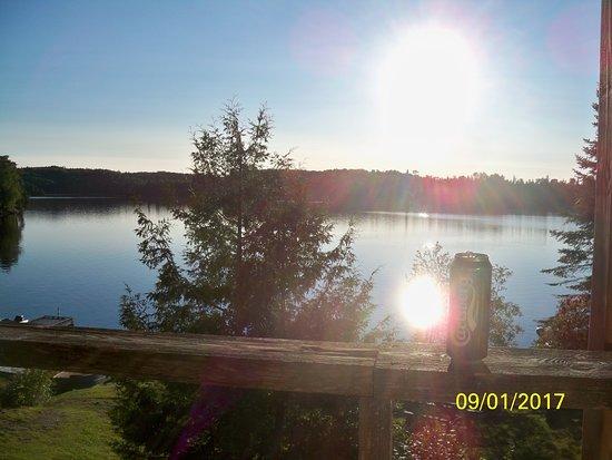 Shining Tree ภาพถ่าย