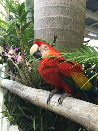ReefView Apartments: Kishi the blind parrot! She will greet you as you arrive!