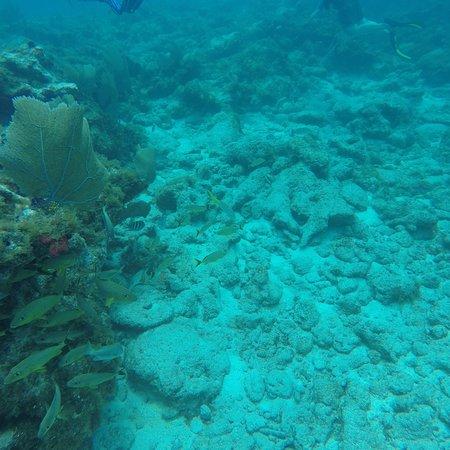 Florida Keys Dive Center: photo2.jpg