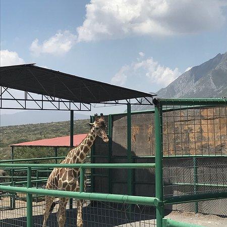 photo1 jpg - Picture of Xenpal Petting Zoo, Villa de Garcia