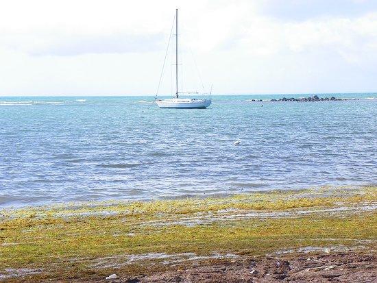 Icacos Island: 101_0438_large.jpg