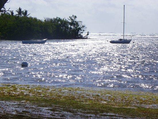 Icacos Island: 101_0437_large.jpg