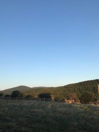 Yaniklar Foto