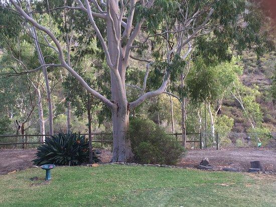 Perth Hills Photo