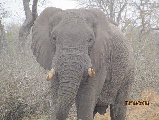 Chasin'Africa Photo