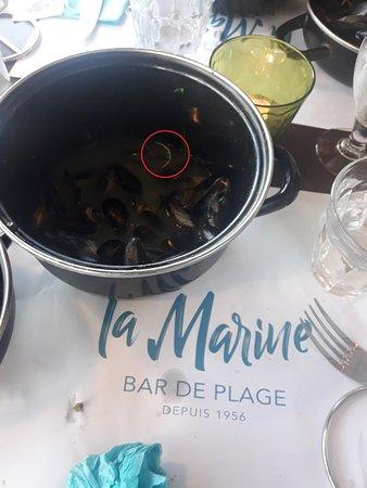 Langrune-sur-Mer, Γαλλία: Un morceau de plastique retrouvé dans le jus de moule ( provenance: Bouchon du vin blanc de cuis