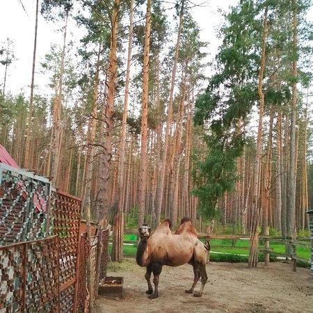 Восьмая миля: Мини-зоопарк