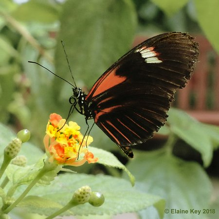 In the butterfly hall