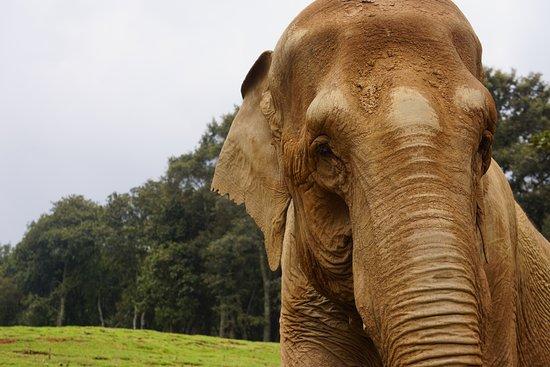 Ixtlahuaca de Rayon, Mexico: Elefantes